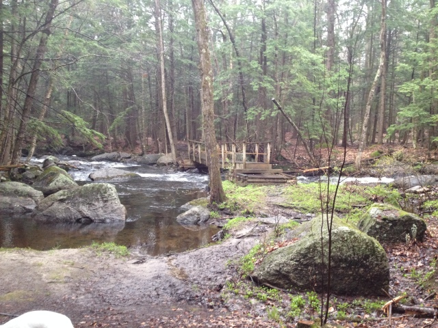 A New Englander stream in the woods
